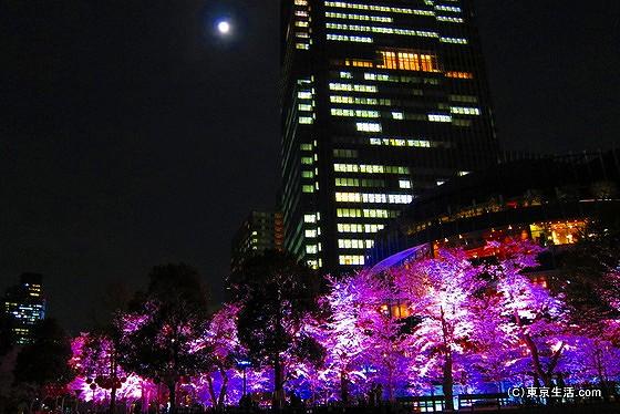 東京ミッドタウン|都心の夜桜が幻想的過ぎたの画像