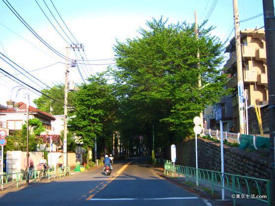 桜ヶ丘の桜の並木道
