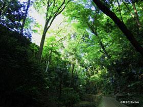 ジブリのような森の散歩と甘味カフェ|等々力渓谷
