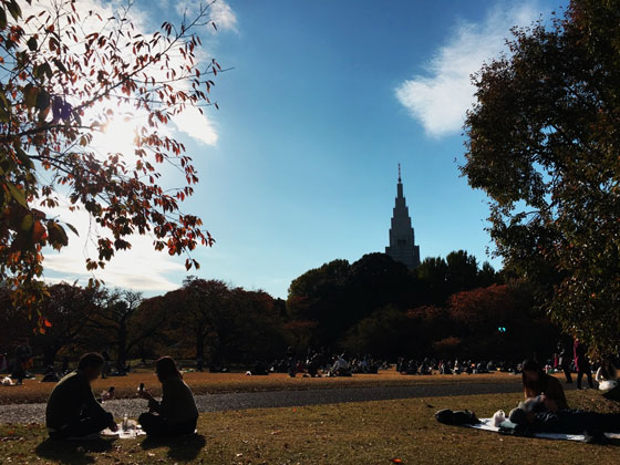 ピクニックやデートが楽しめる新宿御苑