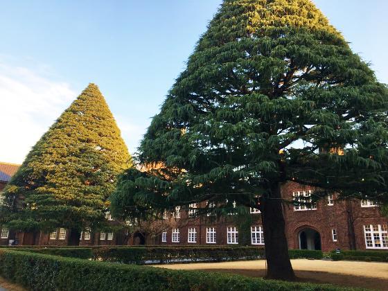 立教大学の並木