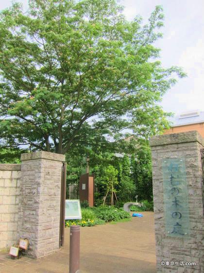 池田山の高級住宅街
