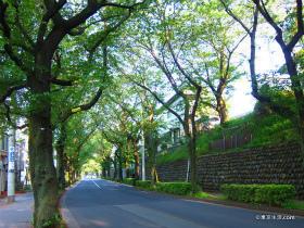 並木道が美しい桜丘の住宅街|不動産